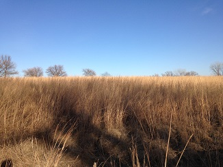 native prairie grass.JPG