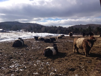 outwinter-belties